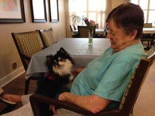 dog on a lap of old woman