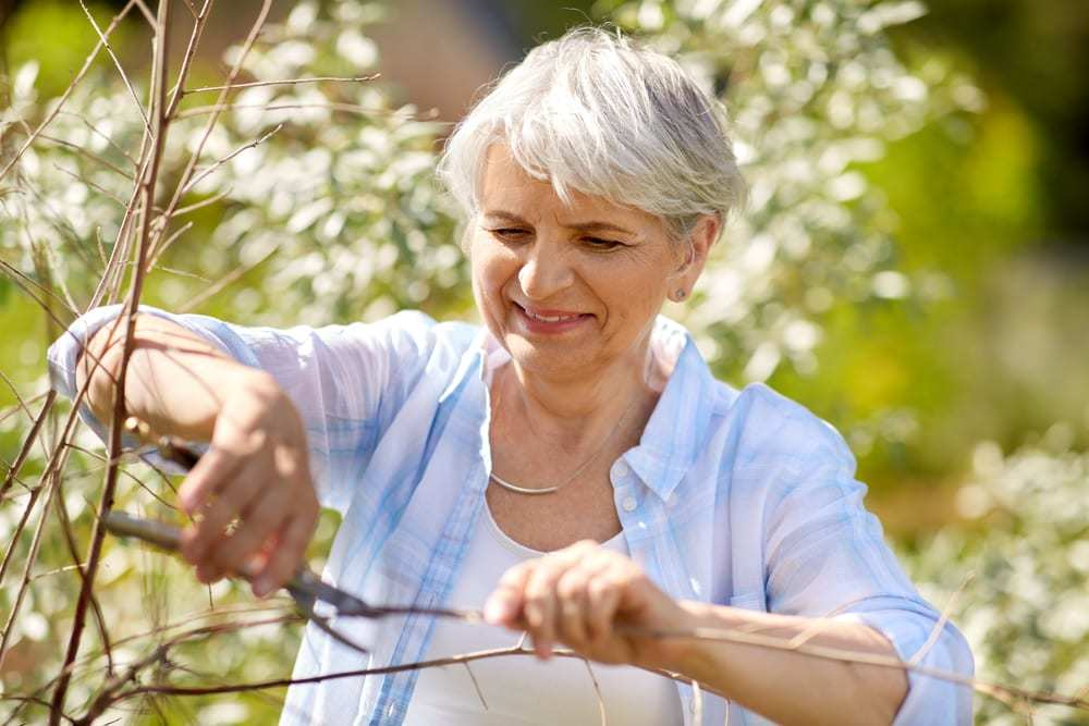 senior woman pruning plant with shears